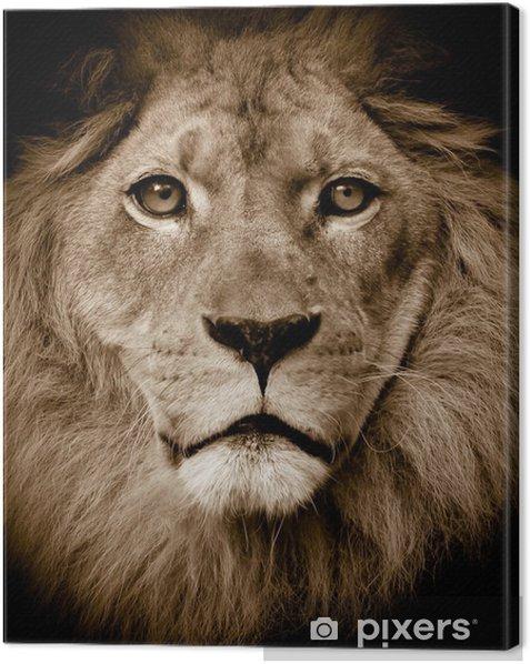 Leinwandbild Lion portrait - Themen