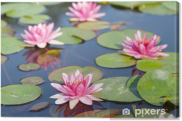 Leinwandbild Lotus im Teich - Blumen