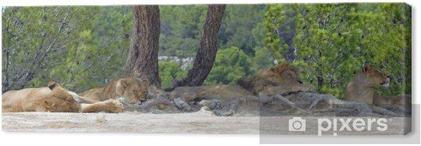 Leinwandbild Löwenfamilie - Säugetiere