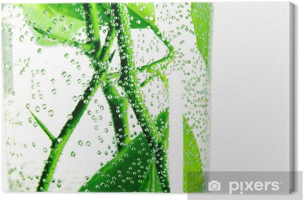 Leinwandbild Luftblasen auf einem Zweige Zitronenbaum im Glas Wasser - Bäume