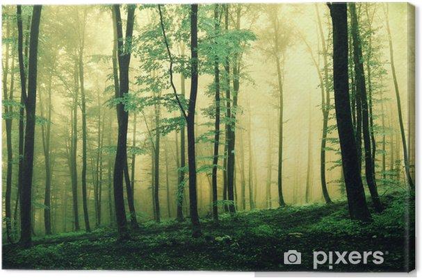Leinwandbild Magie grün gefärbten Wald - Jahreszeiten