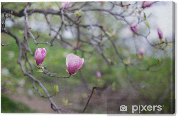 Leinwandbild Magnolienbaum - Jahreszeiten