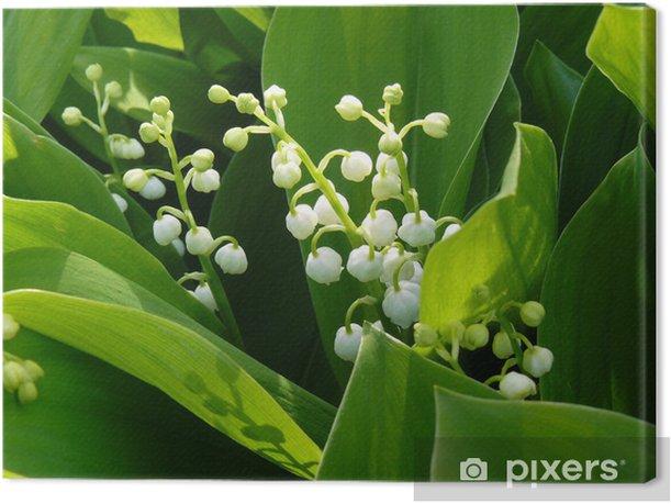 Leinwandbild Maiglöckchen - Blumen