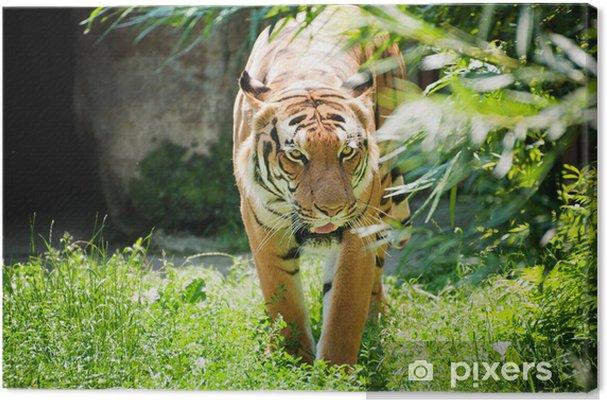 Leinwandbild Malayan Tiger - Säugetiere
