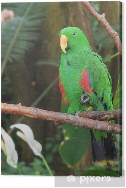 Leinwandbild Männlich Eclectus Parrot, Eclectus roratus - Themen