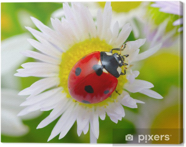 Leinwandbild Marienkäfer Auf Einer Blume Pixers Wir Leben Um