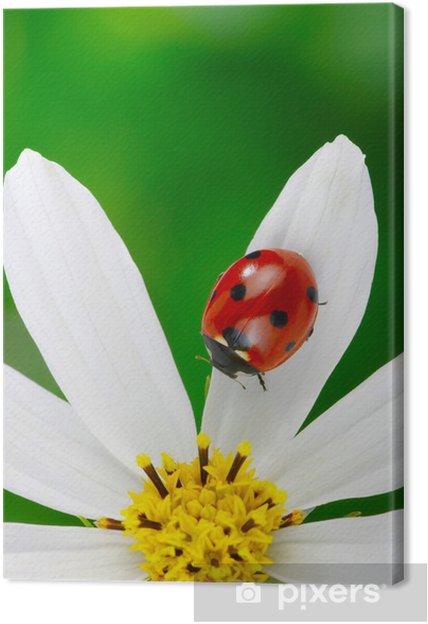 Leinwandbild Marienkäfer Und Blume Pixers Wir Leben Um Zu