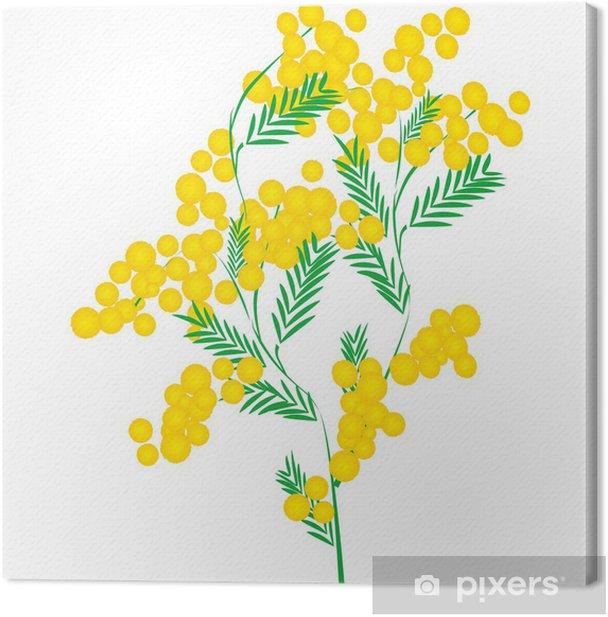 Leinwandbild Mimose - Blumen