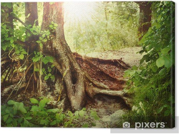 Leinwandbild Misty old forest - Wälder