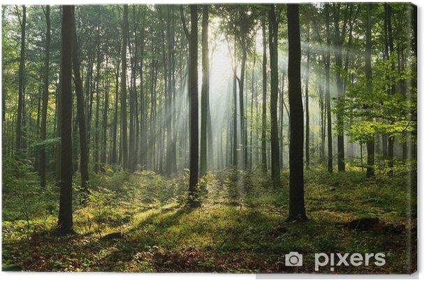 Leinwandbild Morgen im Wald - Landschaften