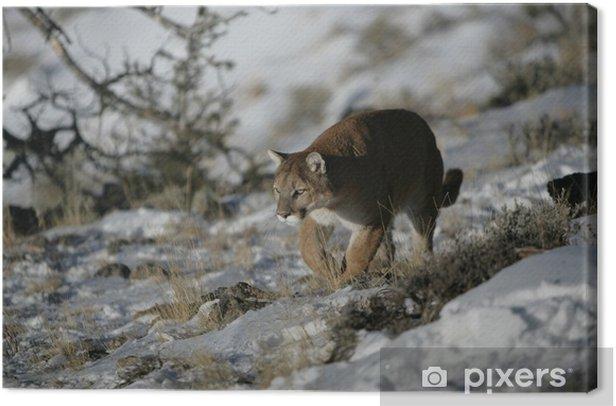 Leinwandbild Mountain Lion Bewegen durch Sage Brush - Säugetiere