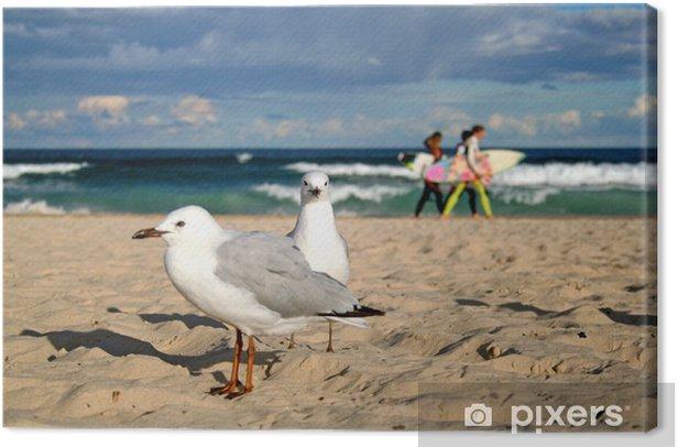Leinwandbild Möwen am Bondi Beach - Ozeanien