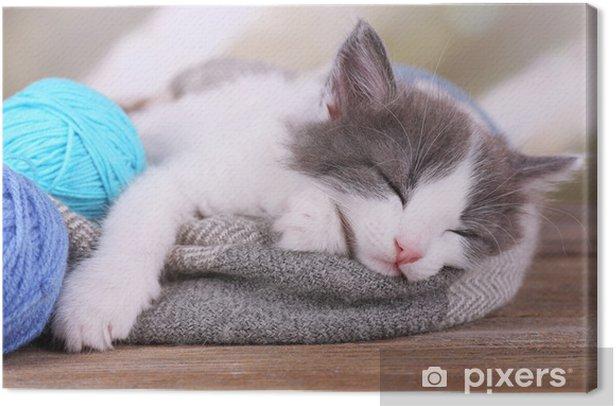 Leinwandbild Nettes kleines Kätzchen schlafen auf Decke, auf hellem Hintergrund - Säugetiere