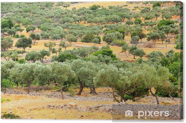 Leinwandbild Olivenhain