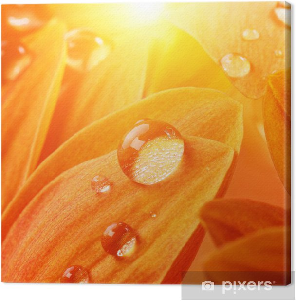Leinwandbild Orange flower Blütenblätter mit Wassertropfen auf sie - Blumen