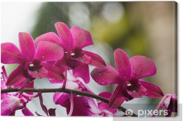 Leinwandbild Orchidee - Blumen