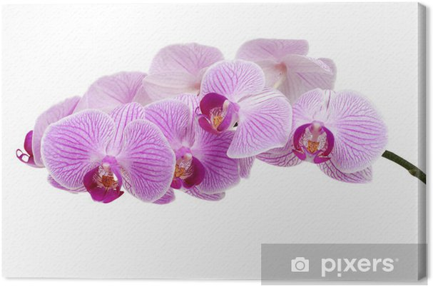 Leinwandbild Orchidee - Beauty und Körperpflege