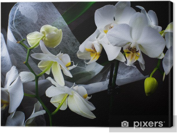 Leinwandbild Orchidee - Feste