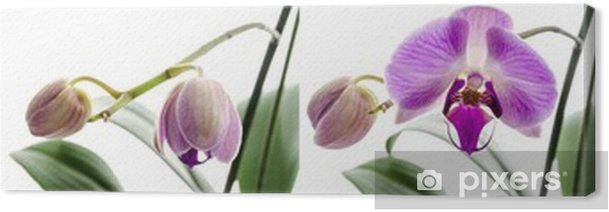 Leinwandbild Orchideenblüte Stadien des Wachstums - Blumen