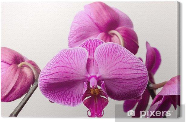 Leinwandbild Orchideenblüten - Blumen