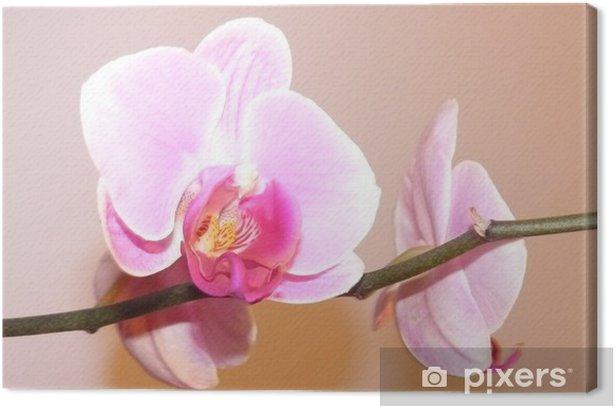 Leinwandbild Orchiden - Blumen