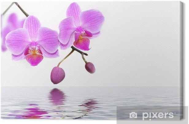 Leinwandbild Orchiden - Themen