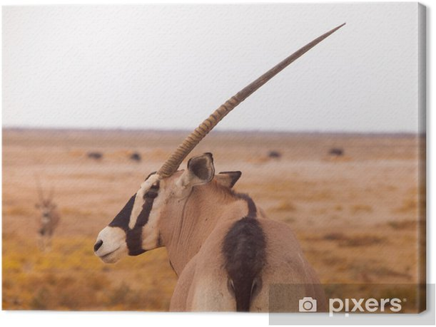 Leinwandbild Oryx Antilope - Afrika