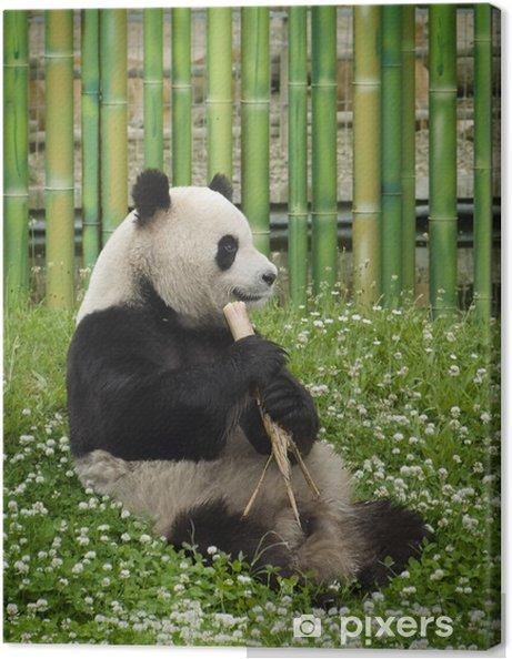 Leinwandbild Oso panda - Themen