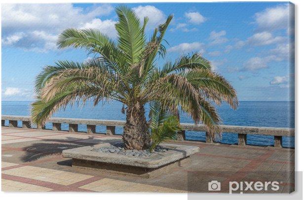 Leinwandbild Palme an der Küste der Insel Madeira - Bäume