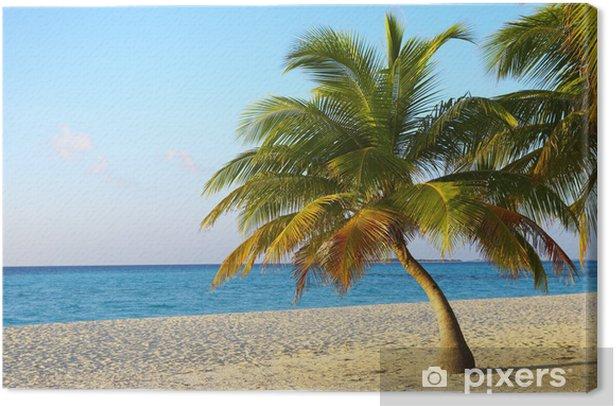 Leinwandbild Palmtree ist auf einem tropischen Strand - Wasser