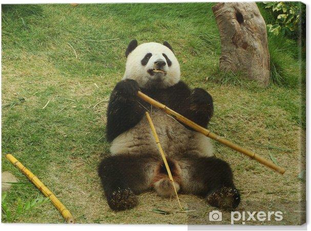 Leinwandbild Panda Bar Essen Bambus China Pixers Wir Leben Um