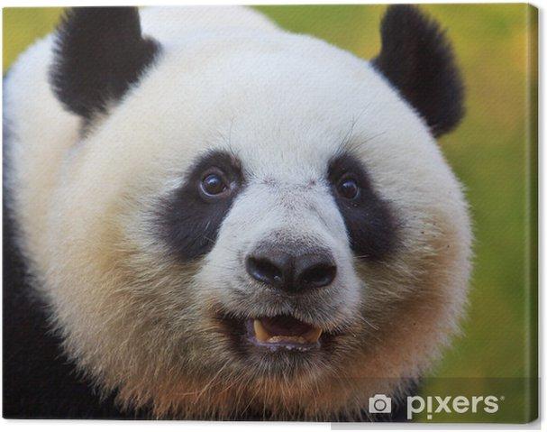Leinwandbild Panda-Bären als chinesische Botschafter - Themen