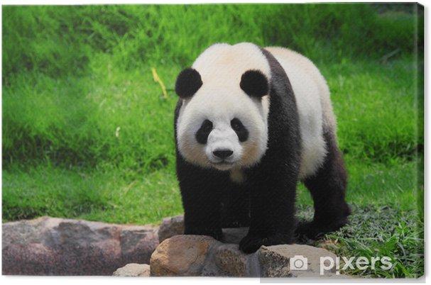 Leinwandbild Panda - Pandas