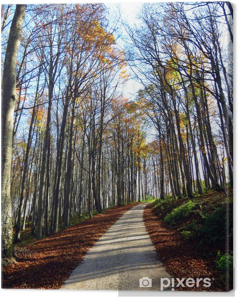 Leinwandbild Pfad im Herbst Wald - Bäume