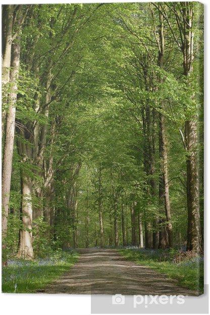 Leinwandbild Pfad im Wald - Bäume