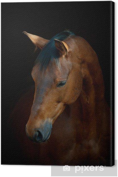 Leinwandbild Pferd auf schwarz -