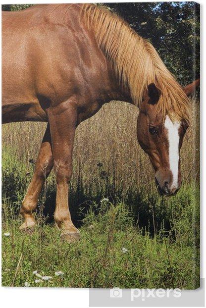 Leinwandbild Pferd - Säugetiere