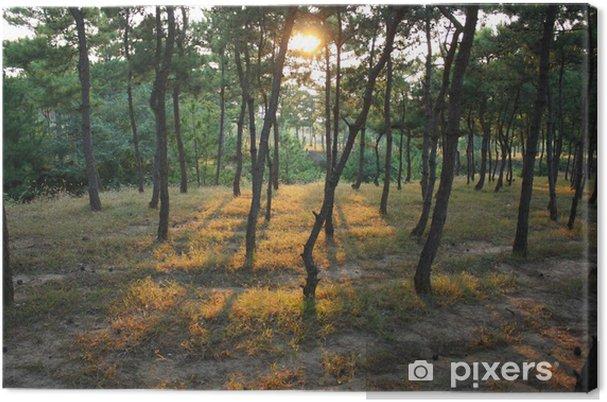 Leinwandbild Pine forest - Jahreszeiten