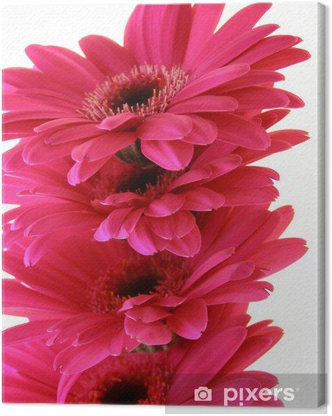 Leinwandbild Pink gerbera - Blumen