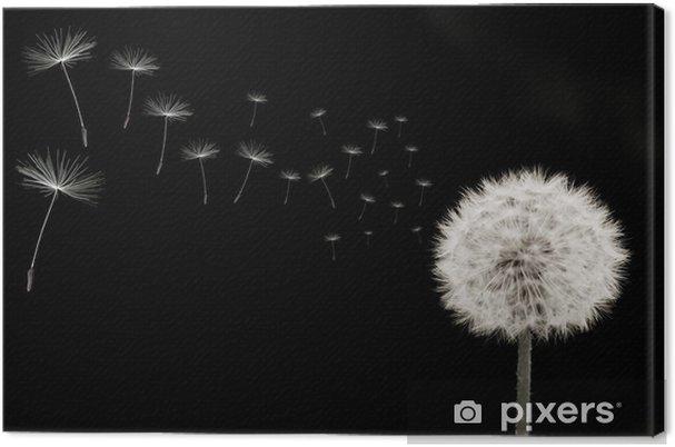 Leinwandbild Pusteblume, rechts, samen, viele, quer, schwarz-weiss