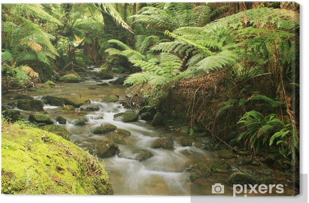 Leinwandbild Rainforest Fluss - Themen