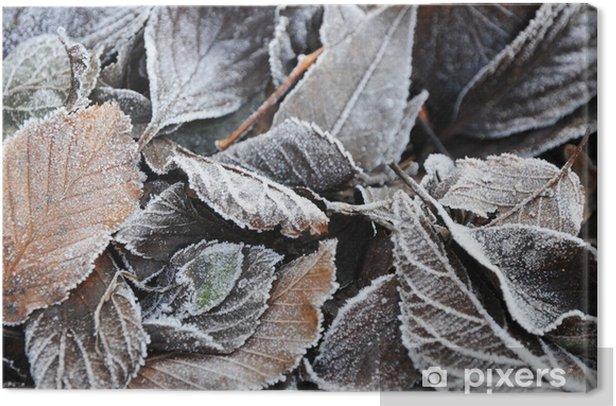 Leinwandbild Rauhreif auf Herbstlaub zeichnet jede Blattader - Jahreszeiten