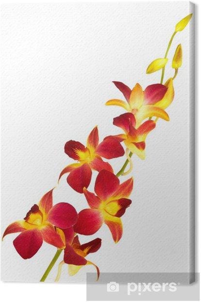 Leinwandbild Red orchid - Wandtattoo