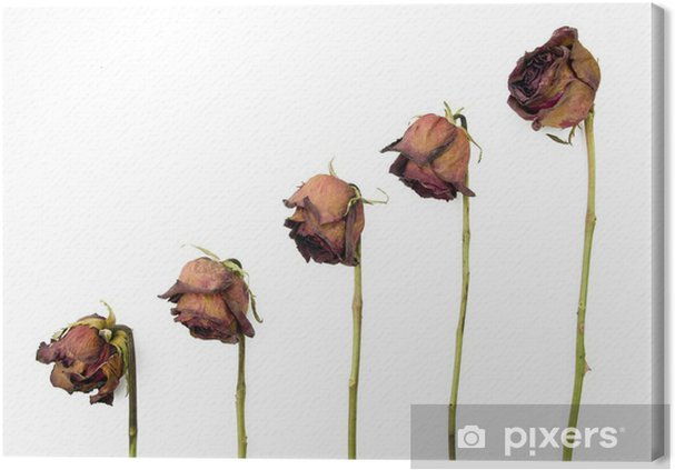 Leinwandbild Reihe von 5 alten getrockneten roten Rosen vor einem dunklen Hintergrund - Blumen
