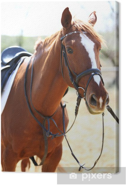 Leinwandbild Reinrassiges Pferd auf die Natur Hintergrund - Landwirtschaft