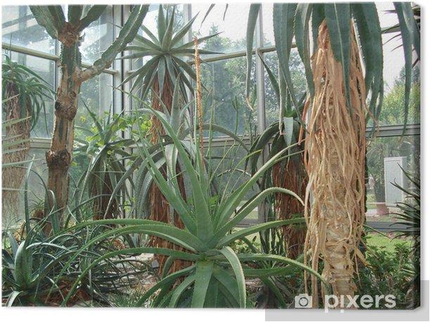 Leinwandbild Riesenkakteen im palmengarten frankfurt am main - Pflanzen