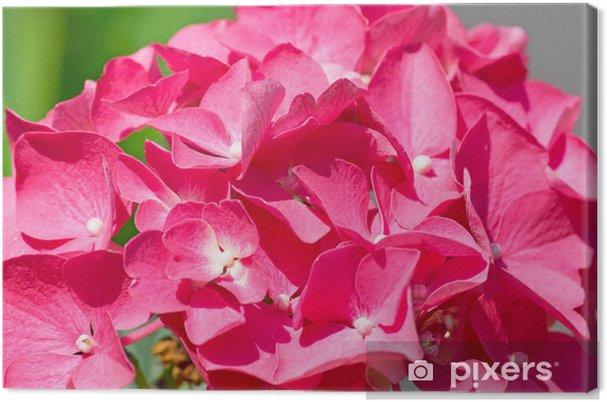 Leinwandbild Rosa Hortensien Nahaufnahme - Blumen