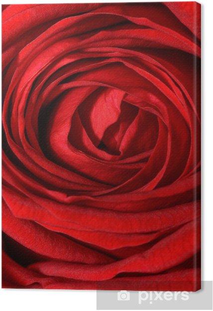 Leinwandbild Rosa rossa - Blumen