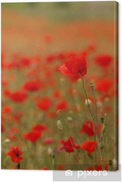 Leinwandbild Rote Mohnblumen - Land
