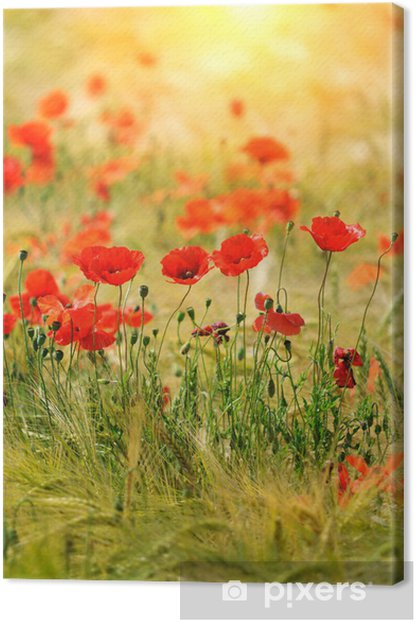 Leinwandbild Rote Mohnblumen -
